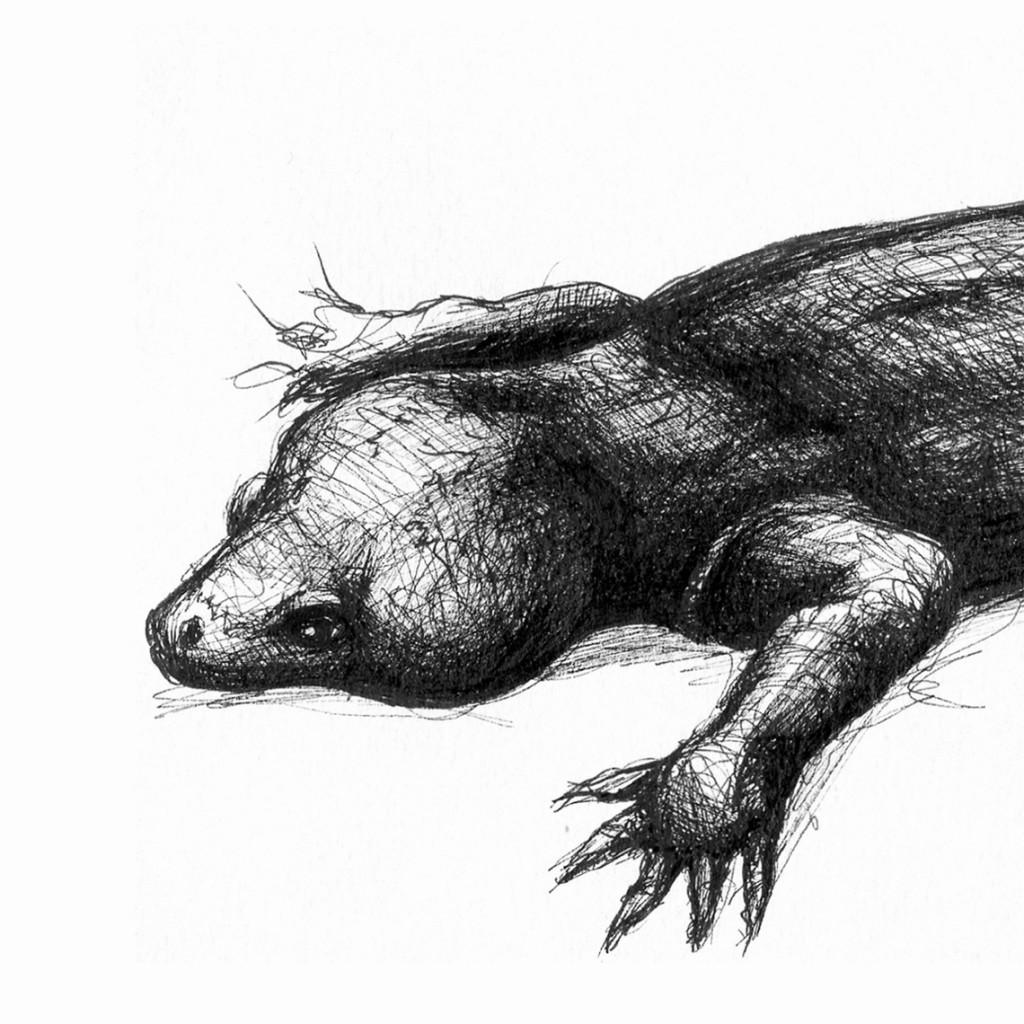 Gecko del Delcourt