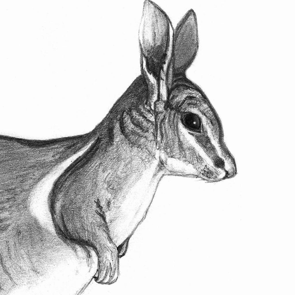 Canguro rabipelado occidental