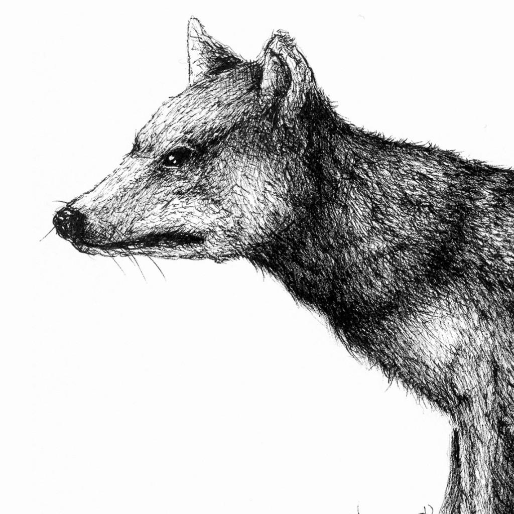 Lobo japonés Honshu