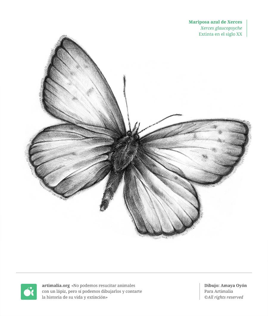 s20_mariposa_azul_xerces