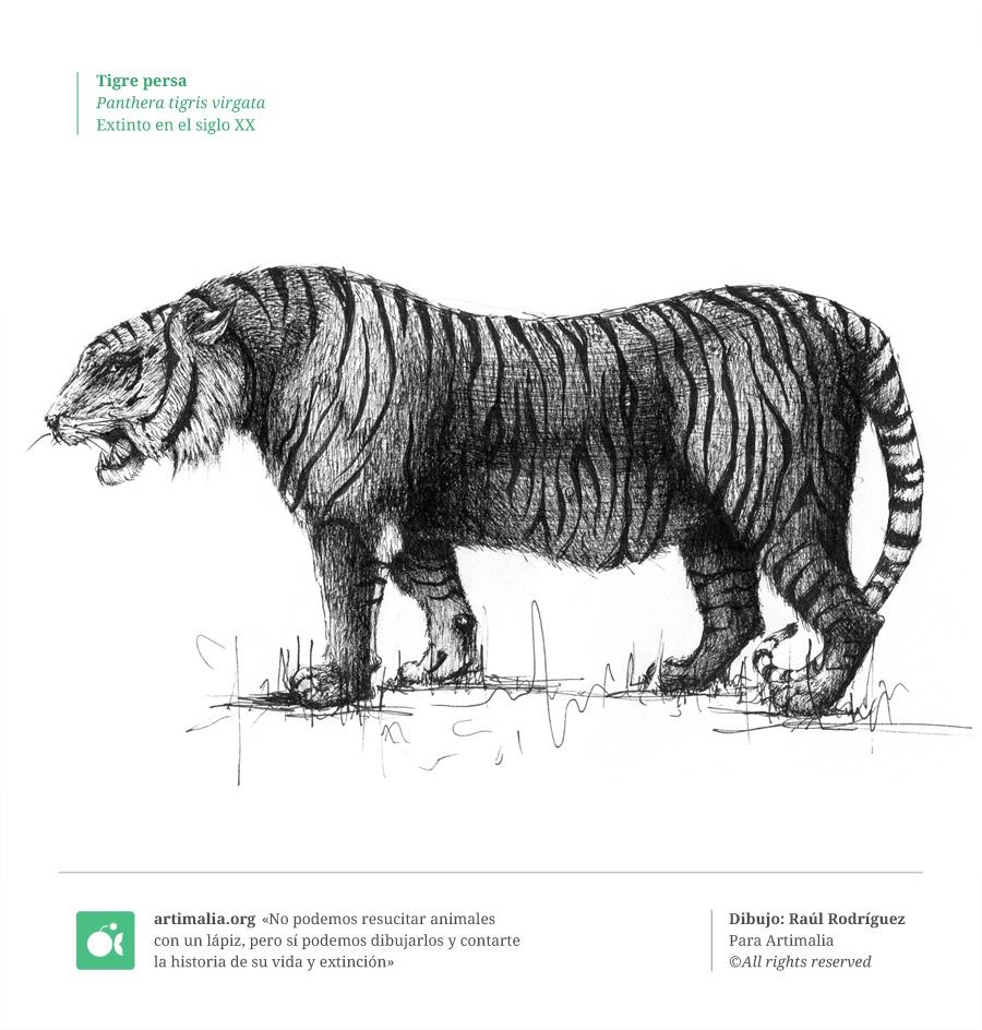 s20_tigre_persa