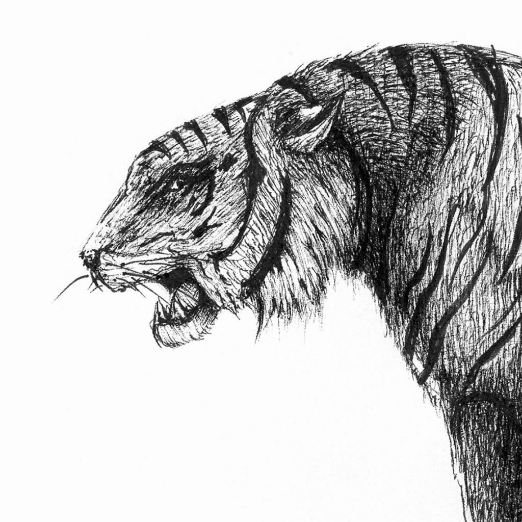 Tigre persa