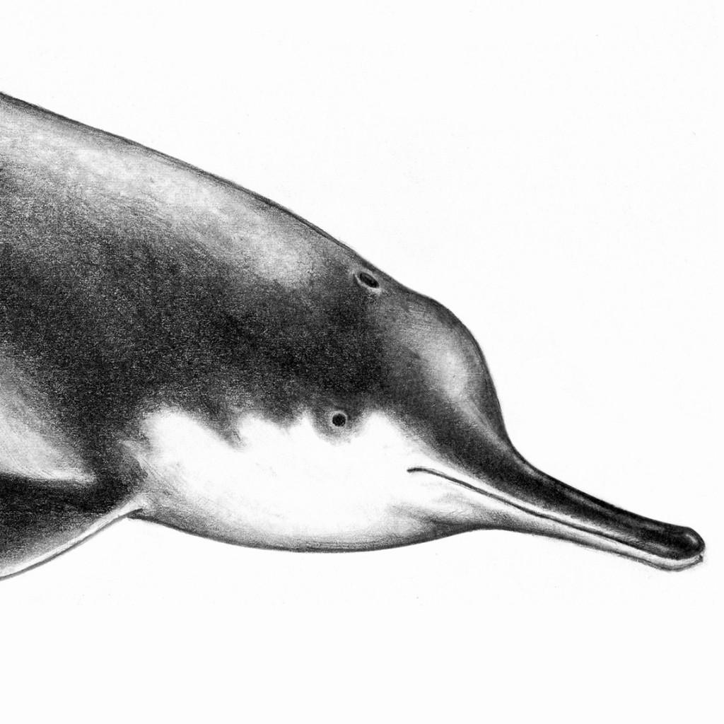 Delfín Baiji