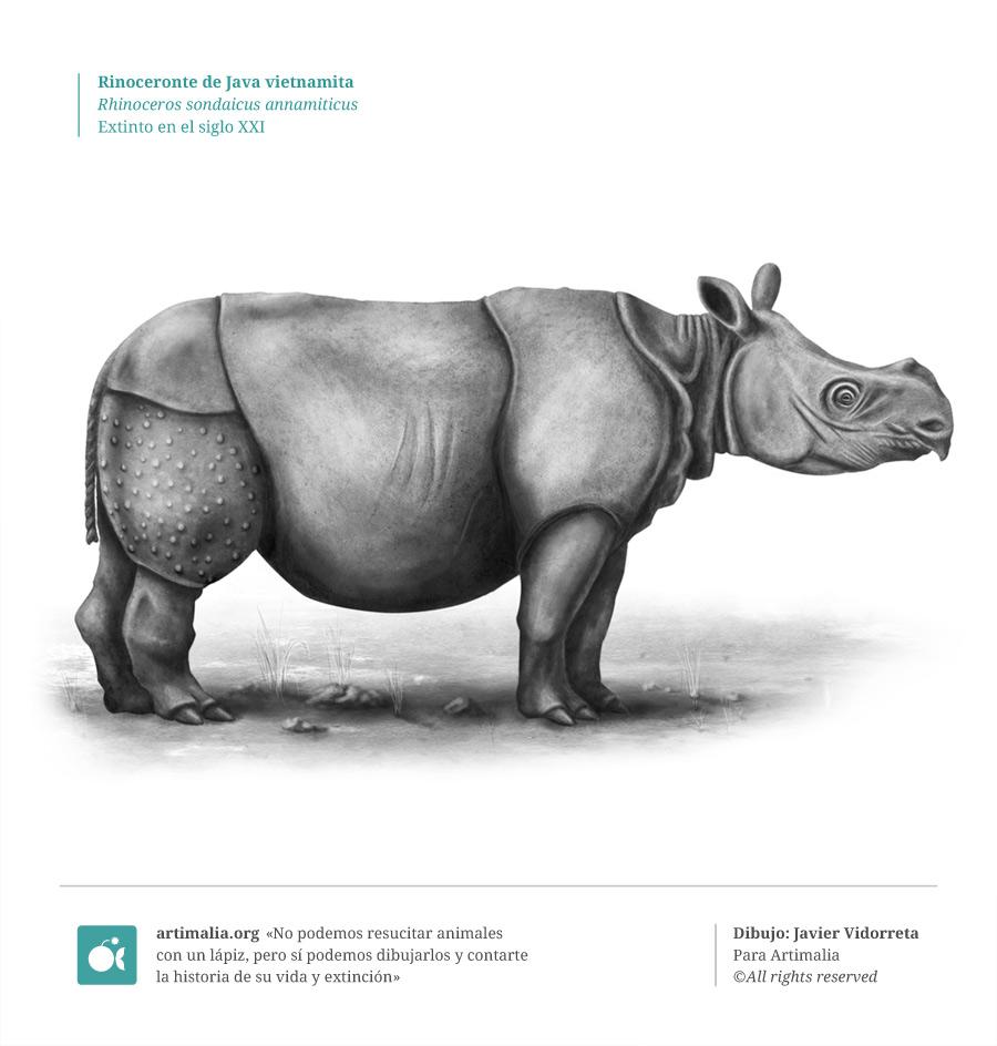 s21_rinoceronte_java_vietnamita