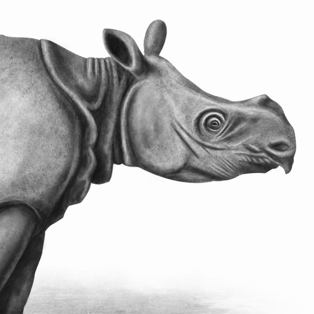 Rinoceronte de Java vietnamita