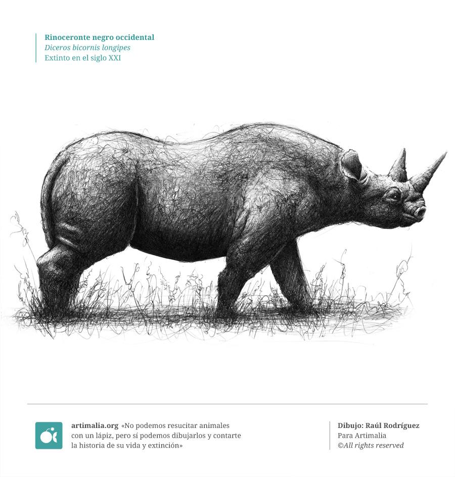 s21_rinoceronte_negro_occidental