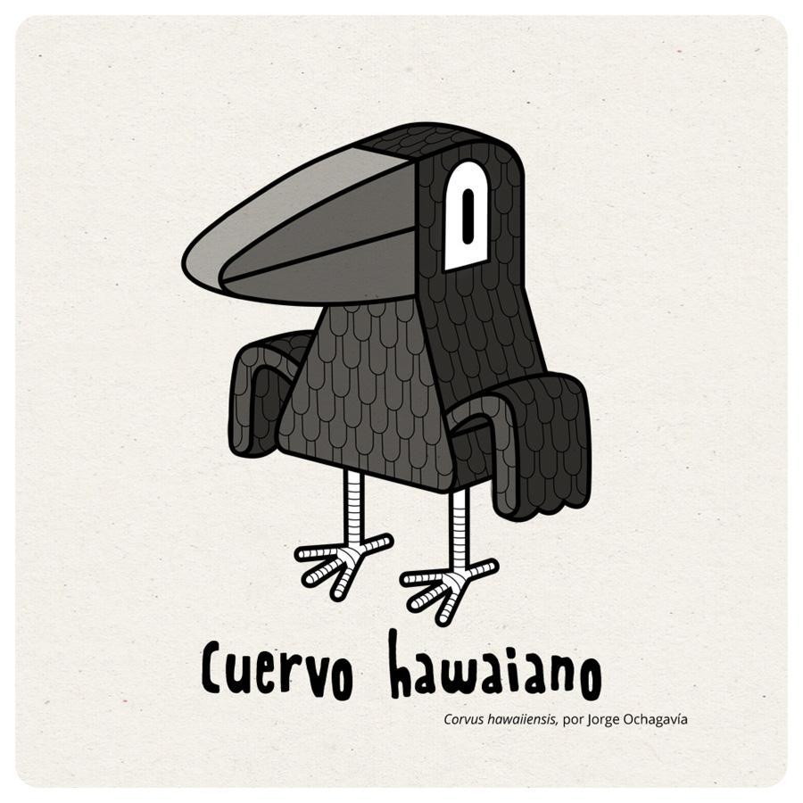 cuervo hawaiano por jorge ochagavia