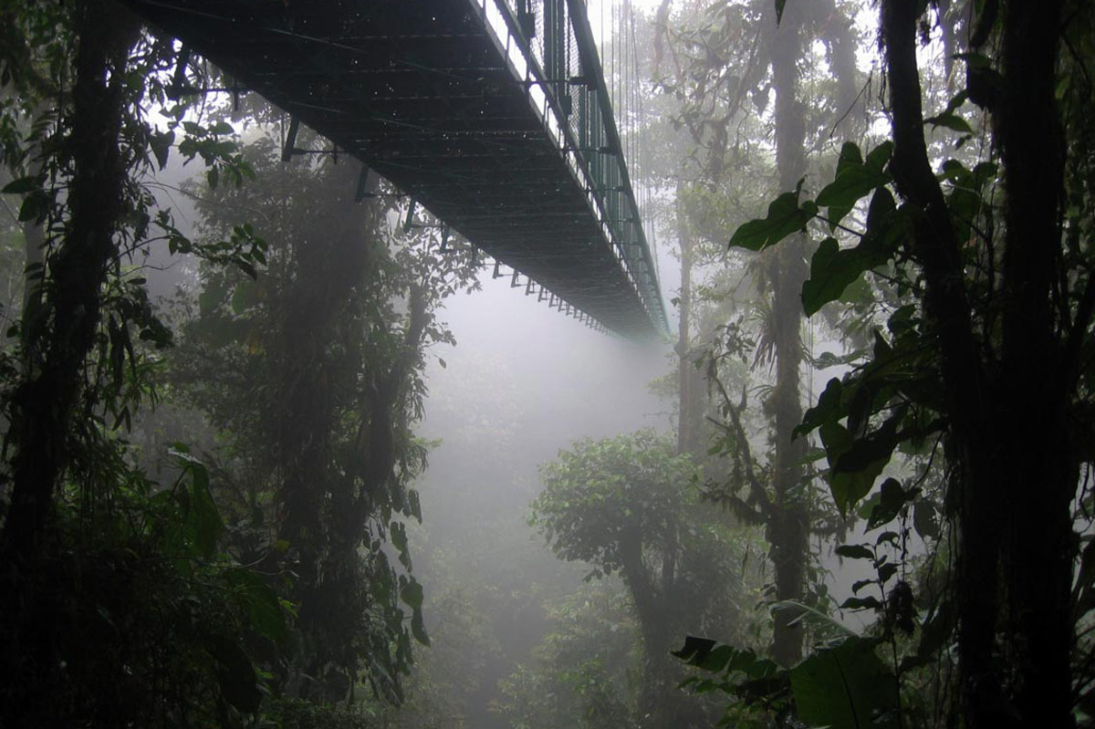 bosque nuboso monte verde habitat sapo dorado