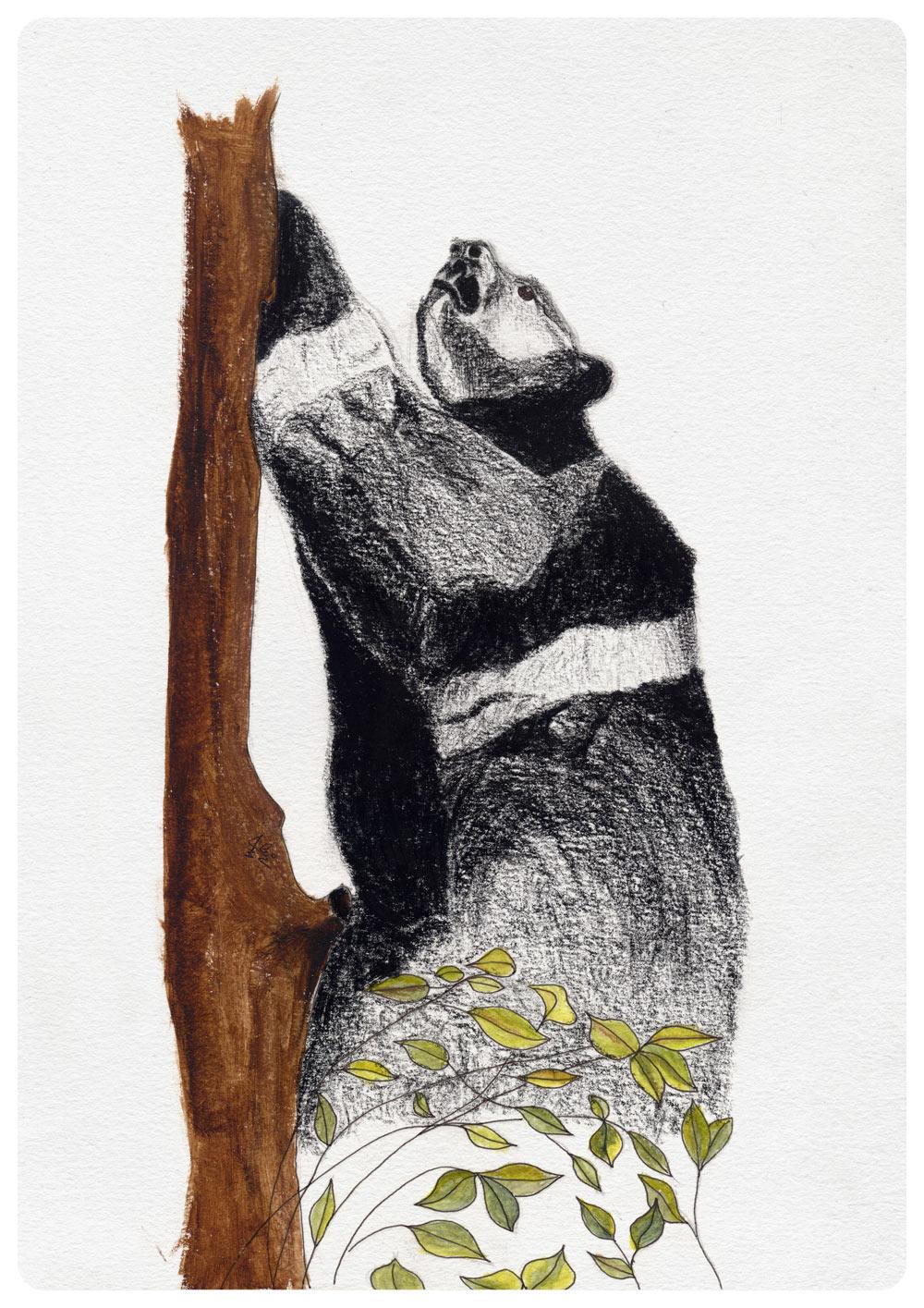 alejandro garnung oso mexicano artimalia