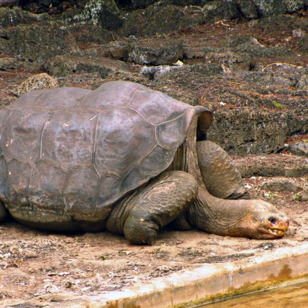 s21_tortuga_gigante_isla_pinta_20