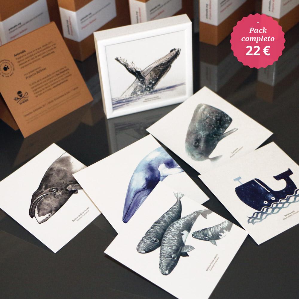 proyecto ballenas artimalia chcuerias de arte sea shepherd