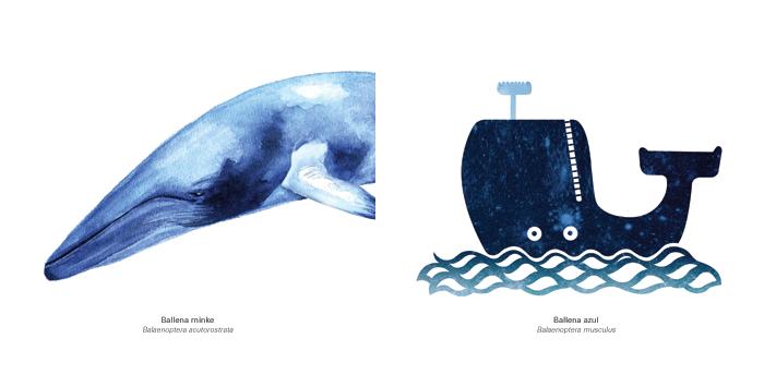 Ballena minke y ballena azul por Diana Soblrado y Jorge Ochagavía