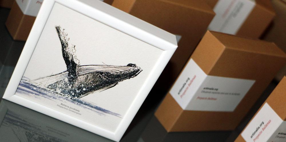 proyecto ballenas artimalia sea shepherd