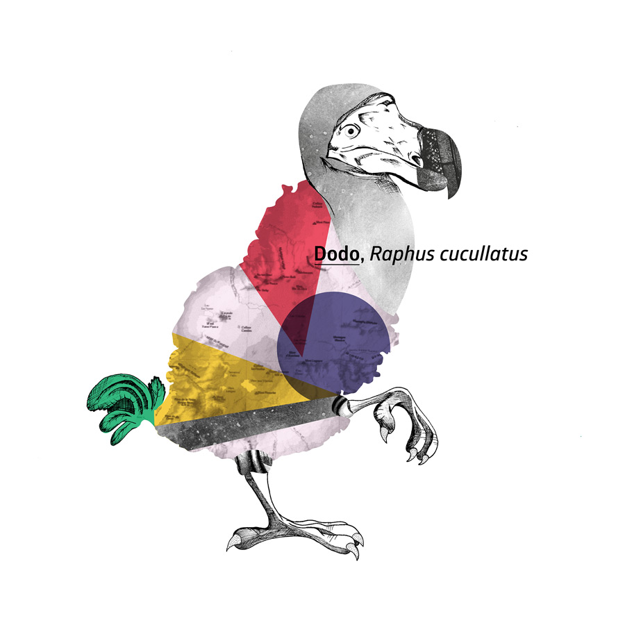 Artimalia. Dodo ilustrado por ©Andrés Giraldo, alumno de 1.º de Barreira Arte + Diseño.