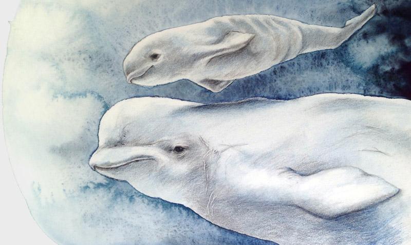 Ilustración de beluga y su cría, por ©Asun Parilla, para Artimalia