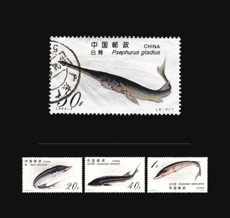 Blog Artimalia, sello postal pez espátula del Yangtsé