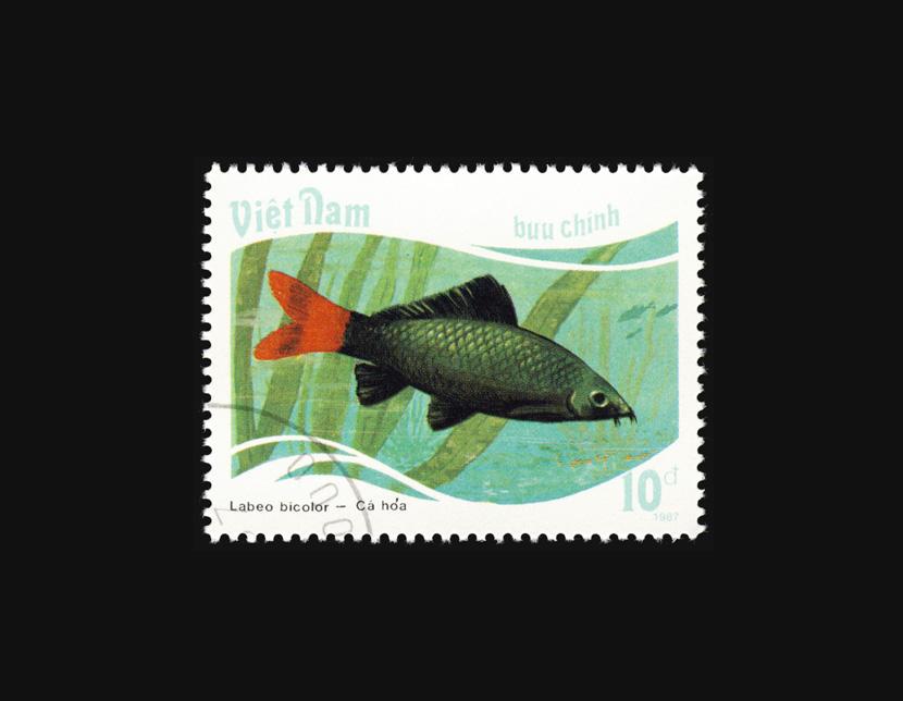 Blog Artimalia, sello postal tiburón de cola roja