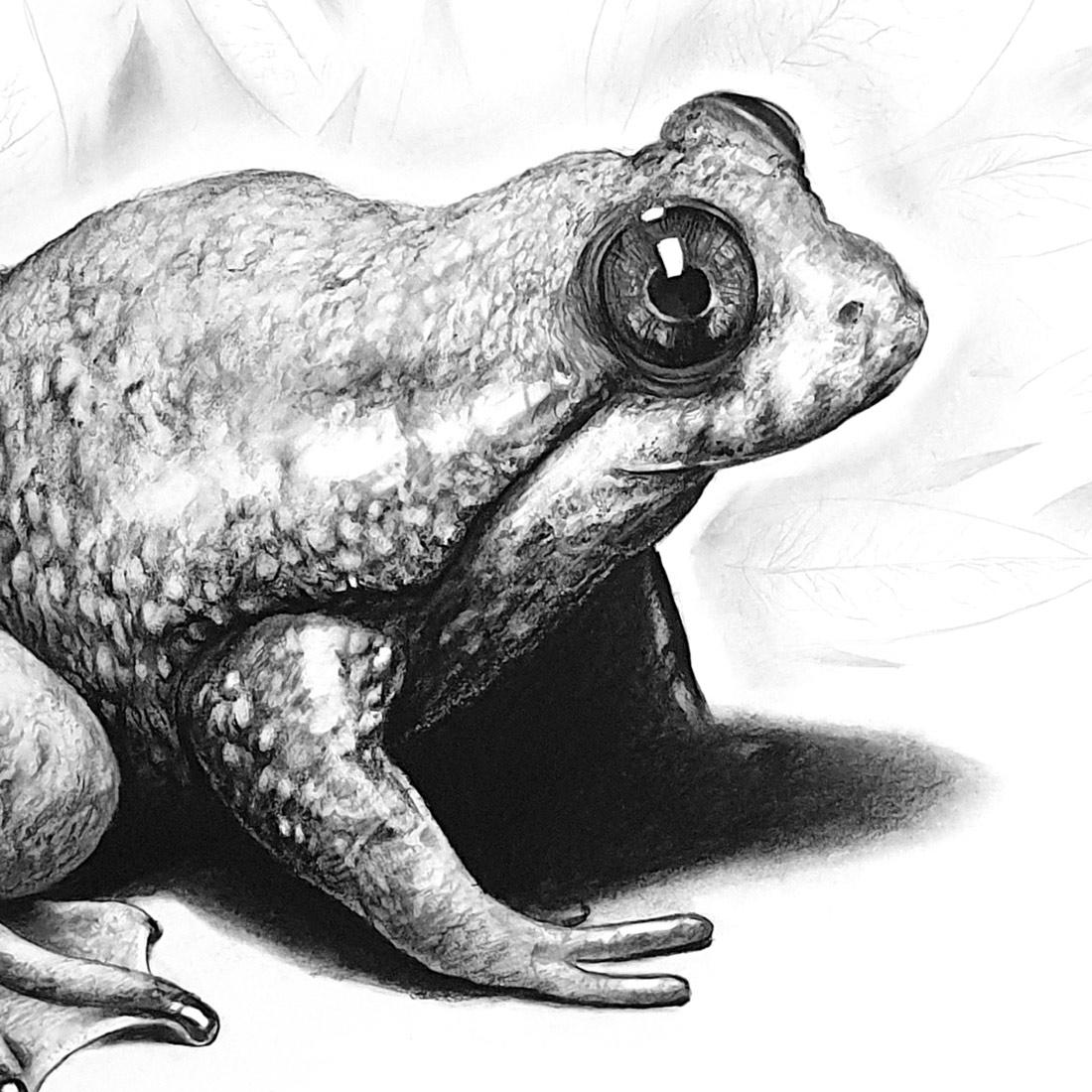 Artimalia, rana de incubación gástrica del norte